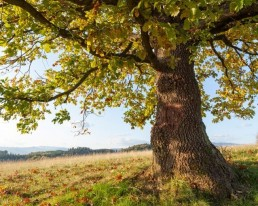 Strom sebapoznania